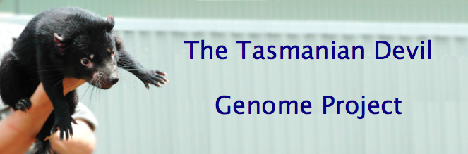banner: The Tasmanian Devil Genome Project