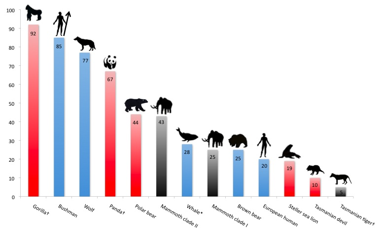 bar chart of diversity for various species